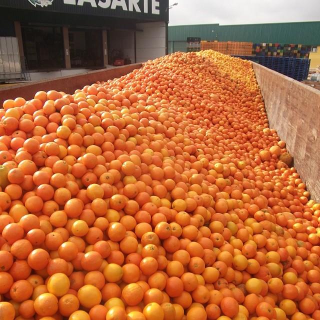 naranjas en planta de manipulación